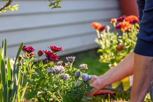Hands planting spring flowers – Property maintenance projects