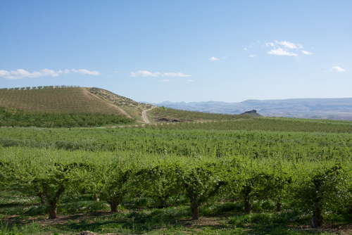 Idaho Vineyard Real Estate - Is it a smart investment?